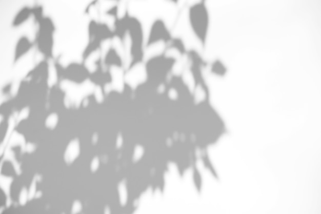 Leaves natural shadow overlay on white texture background