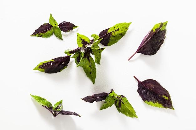 白地に色の緑と紫のバジルの葉。白斑の効果