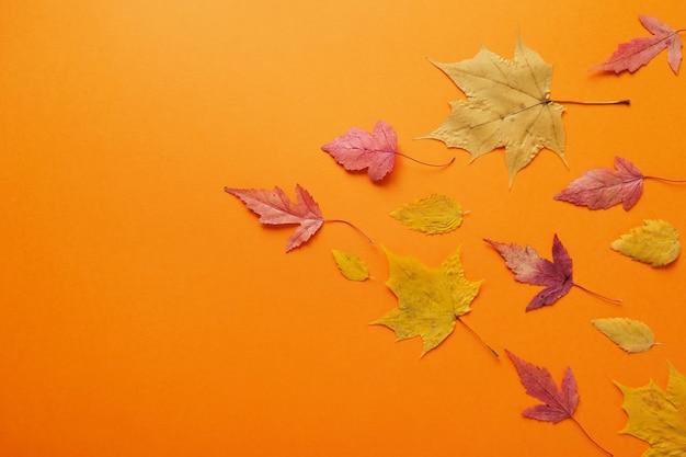 가을 빨간색, 주황색, 노란색 잎의 잎이 떨어집니다. 오렌지 배경에가 개념