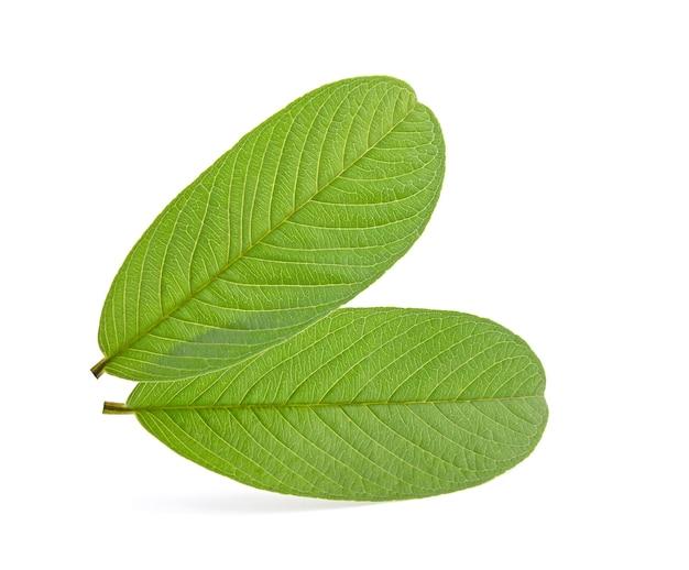 고립 된 구아바의 잎