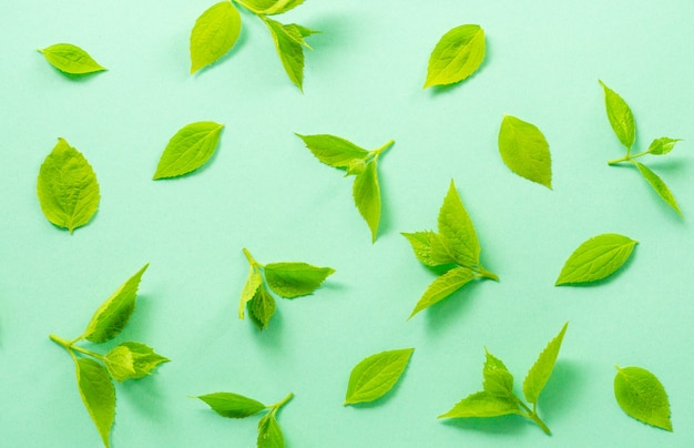 Листья жасминового куста