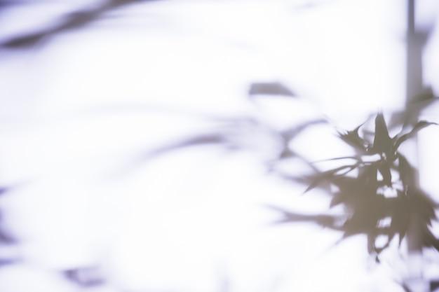 白い背景の上の影の葉