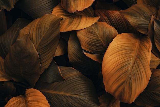 Листья spathiphyllum cannifolium abstract красный темный текстура природа фон тропический лист