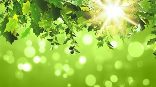 日当たりの良い緑の背景に緑の葉のレンダリング3d
