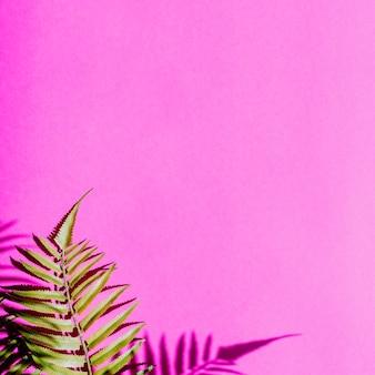 カラフルな背景の上の葉