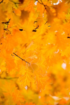 Листья на ветвях в осеннем лесу.