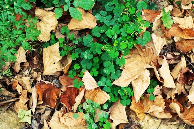 Листья на фоне земли