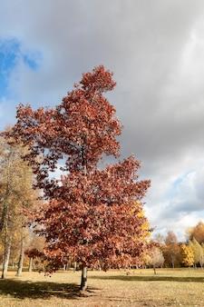 Листья на деревьях, осень, крупным планом листва желтого цвета на деревьях, осенний сезон,