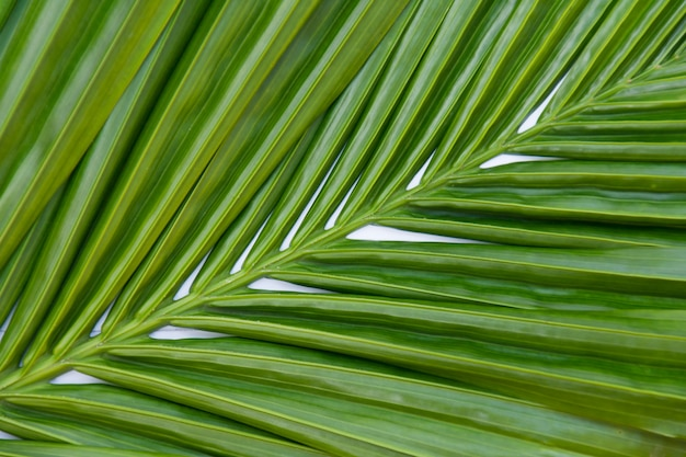 Leaves palm green background