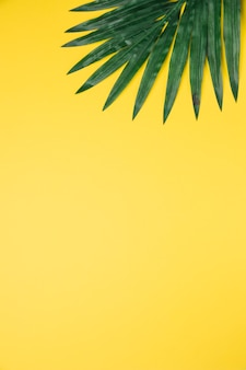 Leaves of palm tree on yellow background