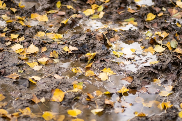 Leaves in a puddle on a muddy path in autumn