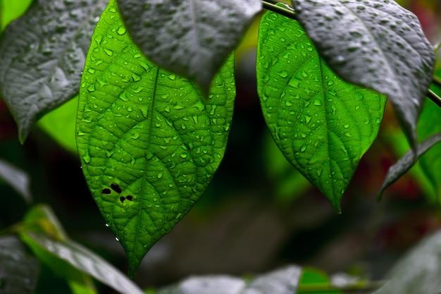 暗い背景に日中の自然光を反射する葉