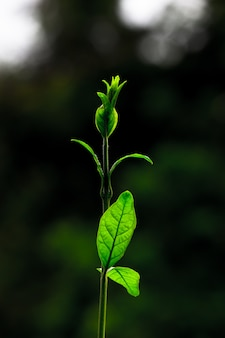日中の自然光を反射する葉