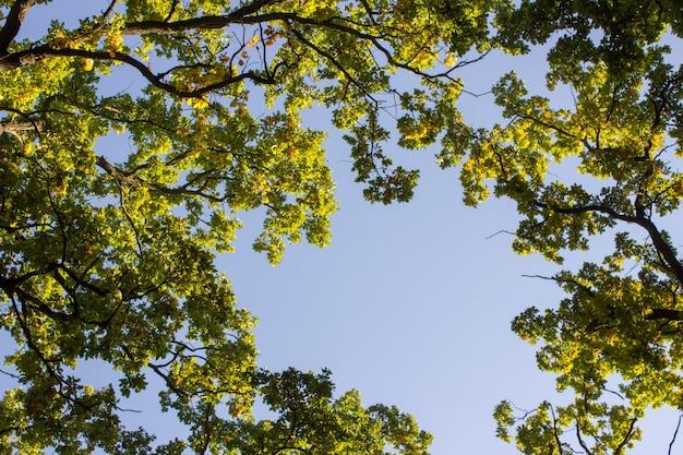 나뭇잎 햇빛 나무 껍질 텍스처 숲 배경 낙엽수 침엽수