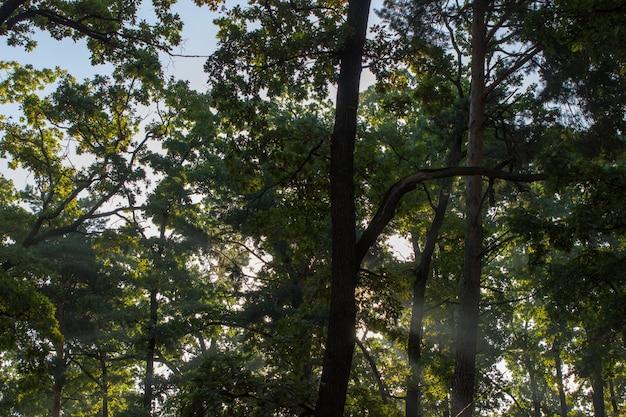 나뭇잎 햇빛 나무 껍질 질감 숲 배경 낙엽수침엽수