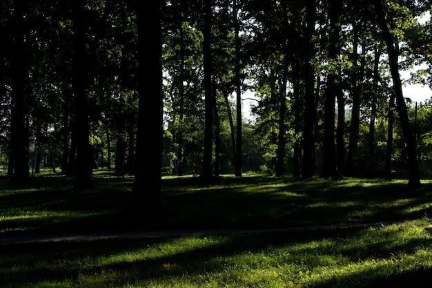 나뭇잎 햇빛 나무 껍질 조직 자연 숲 배경 낙엽수 침엽수
