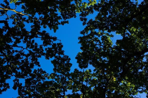 나뭇잎 햇빛 나무 껍질 조직 자연 숲 숲 배경 낙엽수 침엽수