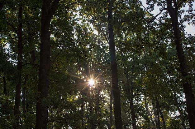 나뭇잎 햇빛 나무 껍질 질감 자연 숲 숲 배경 낙엽수 침엽수