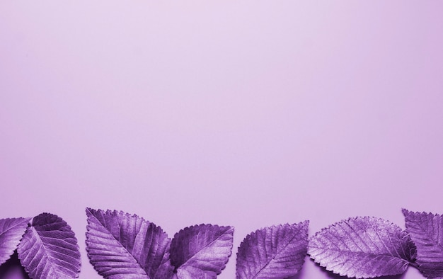 Листья окрашены в фиолетовый горизонтально сверху осенняя концепция вид сверху осенних листьев в фиолетовом оттенке ...