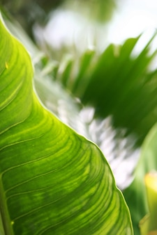 열 대 숲 나무 질감 배경