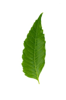 Leaves on a white