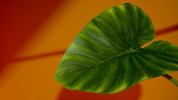 薄黄色の背景の葉。植物を使ったミニマルなスタイルのデザイン。抽象的な背景、3dレンダリング