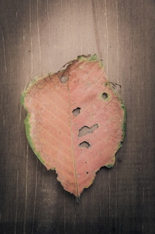 The leaves on the wooden floor