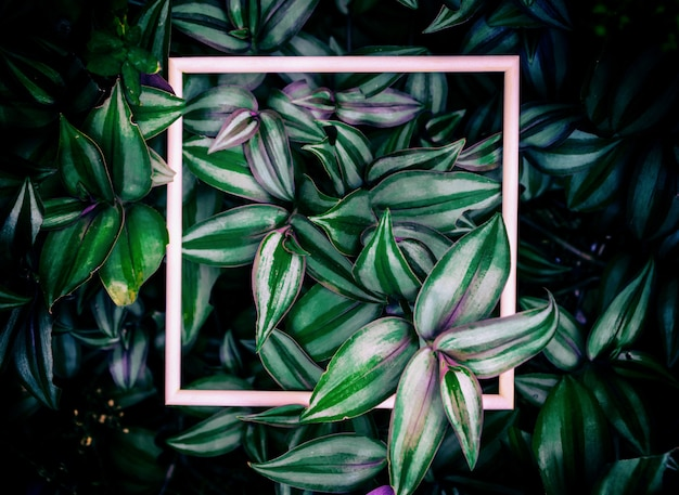 Leaves and wooden frames of the background