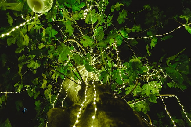 Led lights decorating a tree at night to create a romantic atmosphere at a dinner.