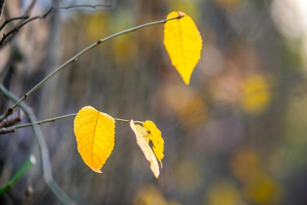 秋の屋外で裸の枝に黄色の葉を残しました。
