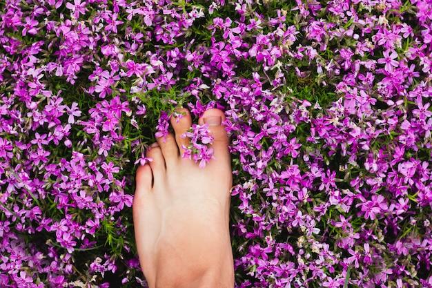 あなたのユニークなテキストのための場所を持つ屋外の花の脚。