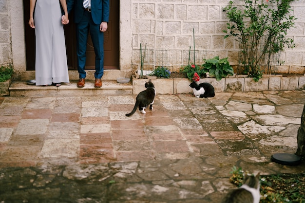 Legs of groom and bride who joined hands standing on the threshold of a stone house in the courtyard