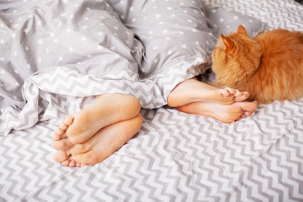 Legs of lovers under blanket and red cat sit on bed