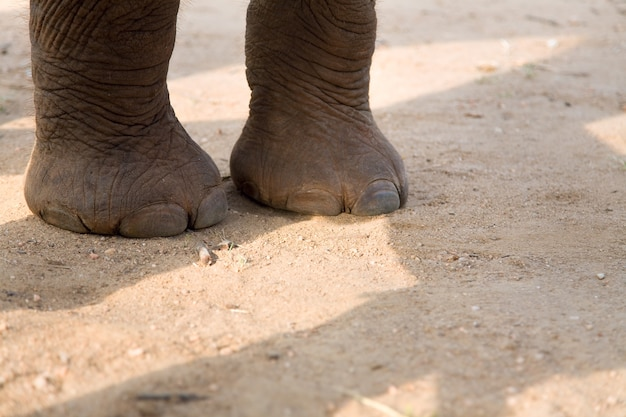 道路上の象の赤ちゃんの足