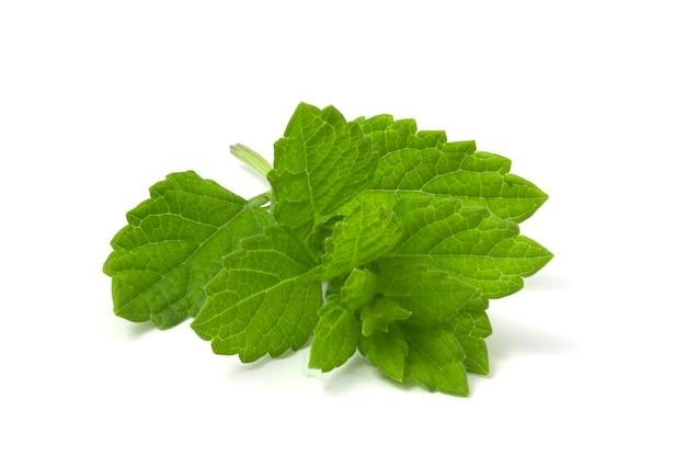 레몬 밤 나뭇가지 흰색 배경에 고립입니다. 음료를 위한 향기로운 레몬 식물.