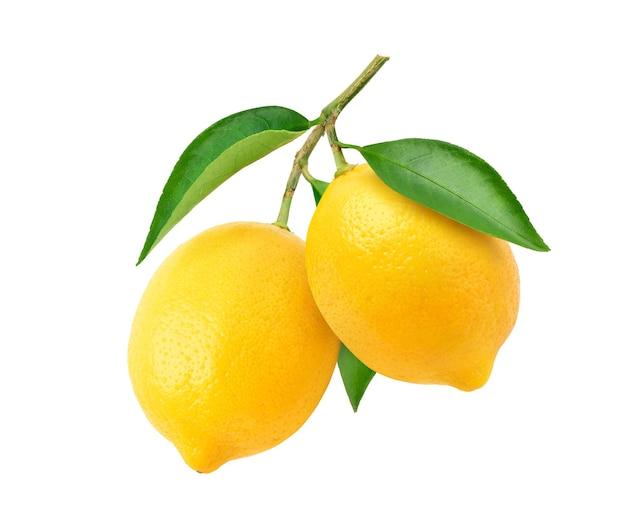 Лимонные плоды, свисающие с веткой и изолированными листьями