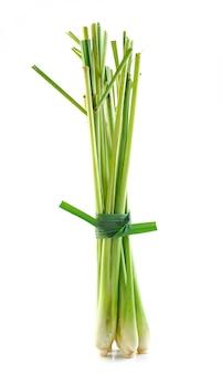 Lemon grass isolated