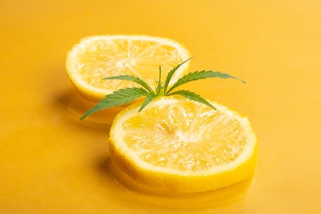 Lemon hemp, medical marijuana with citrus flavor and aroma, lemon wedges with marijuana bud on yellow background.