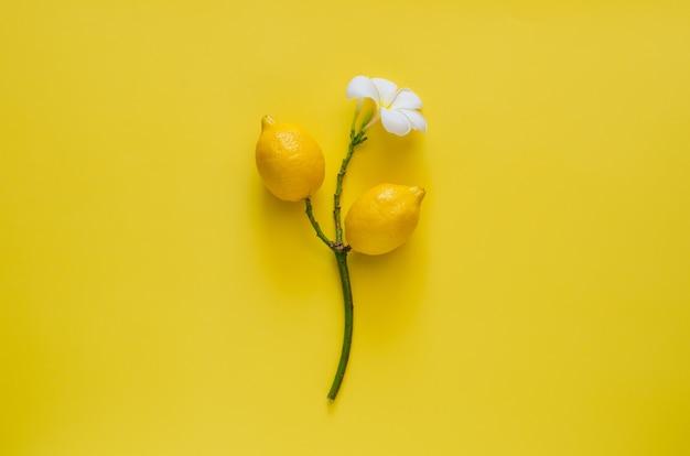 Лимон на дереве франжипани с его цветком на желтом фоне