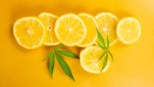 레몬 슬라이스와 마리화나 잎은 노란색 배경, 감귤 향이 나는 대마초입니다.