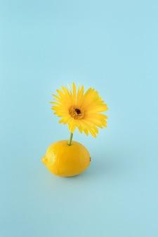 Лимон с желтым цветком герберы на синем фоне. летняя концепция цитрусовых и цветов. минималистичный стиль фотографии.