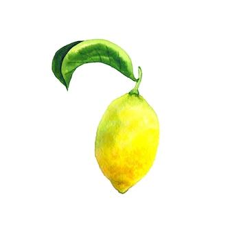 緑の葉とレモン。明るい黄色の果実。デザインのための植物要素。手描きの水彩イラスト。孤立。