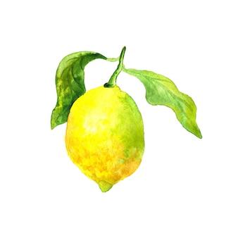 緑の葉とレモン。明るい黄色の果実。手描きの水彩イラスト。孤立。