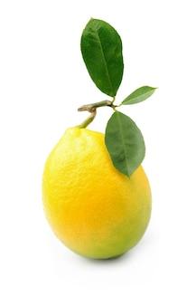 Лимон с листьями на белом