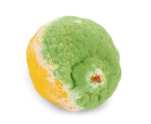 Лимон с плесенью и свежим лимоном, изолированные на белом фоне