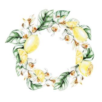 レモン、花と葉、水彩画の花輪。果物。図