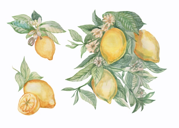 Lemons fruit branch with leaves and flowers tiles majolica provence watercolor illustration hand drawn patern seamless pattern