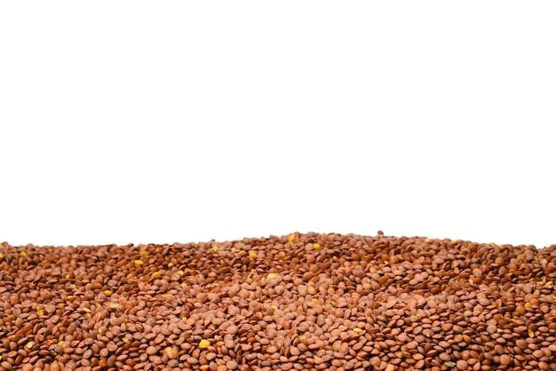 白い背景で隔離のレンズ豆。