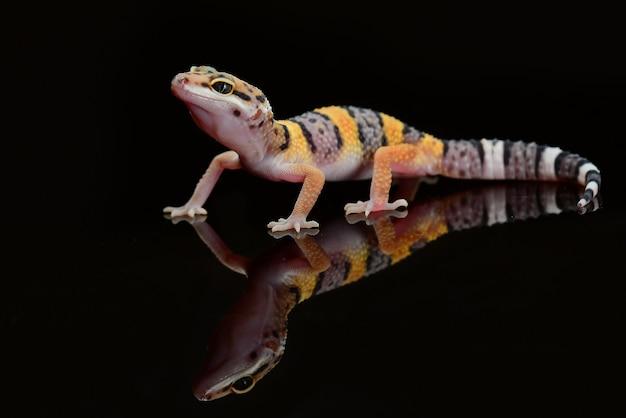 Leopard gecko on a branch closeup