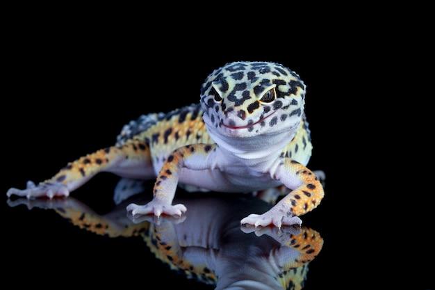 Primo piano del geco leopardo su legno